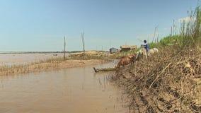 Kühe, Bambus, der Mekong, Kambodscha, Südostasien stock footage