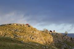 Kühe in den Yorkshire-Tälern Stockfotografie
