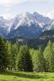 Kühe der Dolomit Stockbilder