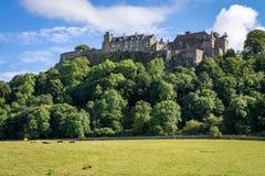 Kühe in der Weide bei Stirling Castle in Schottland Stockfotos