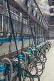 Kühe des maschinellen Melkens unter Verwendung der Melkmaschinen auf dem Bauernhof Stockfotos