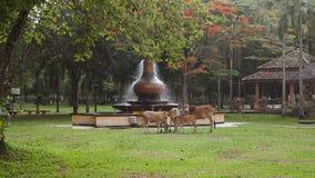 Kühe durch den Park lizenzfreie stockbilder