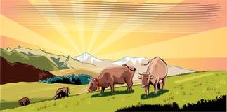 Kühe in einer Wiese, Absicht, zum des Grases weiden zu lassen vektor abbildung