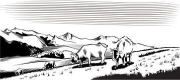 Kühe in einer Wiese, Absicht, zum des Grases weiden zu lassen lizenzfreie abbildung