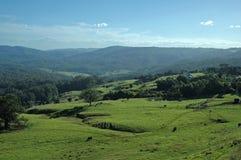 Kühe kommen nach Hause Lizenzfreie Stockfotos