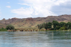 Kühe lassen auf dem Ufer des Flusses im guten Wetter weiden Stockfotografie