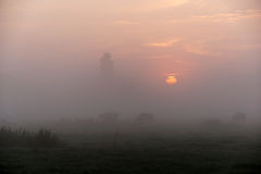 Kühe in Misty Morning stockbilder