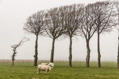 Kühe - nebeliger Tag, Frankreich. Lizenzfreie Stockfotografie