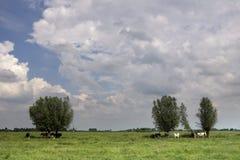 Kühe schützen unter einem Baum stockfotografie