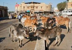 Kühe stehen in der Gruppe auf der Stadtstraße Stockfotos