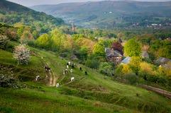 Kühe und Bauernhof Stockfoto
