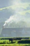 Kühe und Bauernhof auf einem kalten Herbstmorgen Lizenzfreie Stockfotos