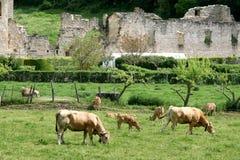 Kühe und Ruinen in Irantzu, Spanien Stockbilder