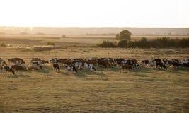 Kühe und Schafe Lizenzfreie Stockfotos