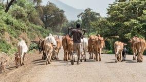 Kühe und Vieh im Omo-Tal von Äthiopien Stockfoto