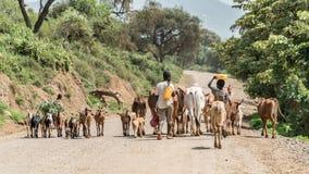 Kühe und Vieh im Omo-Tal von Äthiopien Stockfotografie