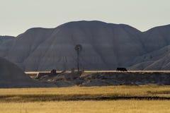 Kühe und Windmühle in den Nebraska-Ödländern Stockfotografie