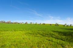 Kühe, Wiese und blühende Bäume in der Schweiz Lizenzfreies Stockfoto