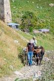 Kühe zum Ziehen eines Pflugs, Svaneti, Georgia Stockfotos