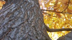 Kühle Ansicht eines Baums im Herbst Stockfotos