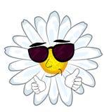 Kühle Kamillenblumenkarikatur Lizenzfreie Stockfotografie