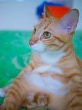 Kühle Katze Stockfotografie