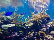 Kühle Koralle Stockbilder