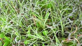 Kühle Morgenatmosphäre mit frischem Gras stockfoto