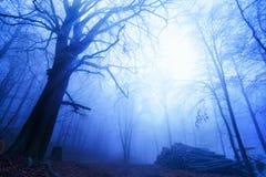 Kühle Stimmung in einem nebeligen Holz Stockfotografie