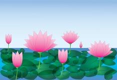 Kühle und schöne rosa Lotosblumen mit Blatt im Flusswasser mit blauem Himmel vektor abbildung