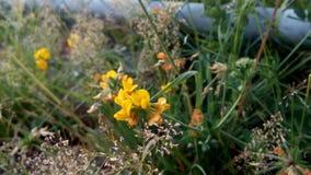 Kühlen Sie, recht gelbe Blume ab Lizenzfreie Stockfotografie