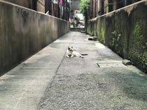 Kühlende Katze auf die Wegart Stockbilder