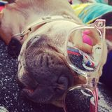 Kühlender Hund Lizenzfreie Stockfotografie