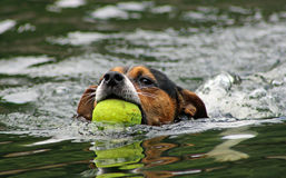 Kühler Hund Lizenzfreie Stockbilder