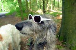 Kühler Hund Lizenzfreies Stockbild