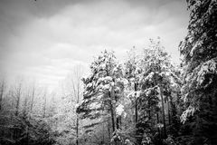 Kühler Wintertag im North Carolina Lizenzfreies Stockbild