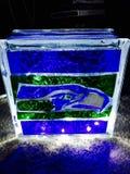 Kühles ehrfürchtiges dunkles Glühen Seahawks-Lampe Stockfotos