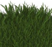 Kühles Gras 3D Stockfoto