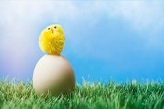 Küken, das auf weißes Ei im Gras steht Lizenzfreies Stockfoto