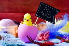 Küken, das von einem Ei und Text feliz pascua, fröhliche Ostern I auftaucht lizenzfreie stockfotografie