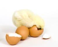 Küken, das zurück im Ei wünscht Stockfotos