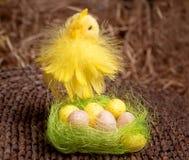 Küken und Eier im Nest Stockbild