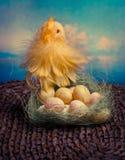 Küken und Eier im Nest Lizenzfreies Stockfoto