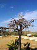 Künstlerisch bloßer Baum mit blauem Himmel stockfotografie