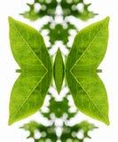 Künstlerische Anordnung für Blätter als Schmetterling Stockbilder