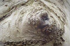 Künstlerische Ausbuchtung eines Buchenbaums, der wie ein geschlossenes Auge aussieht Stockfoto