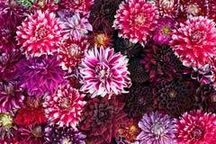 Künstlerische bunte Kunst von den Blumen Lizenzfreie Stockfotografie