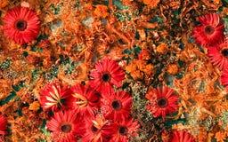 Künstlerische bunte Kunst von den Blumen Stockbilder