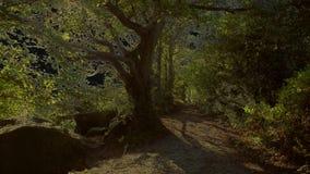 Künstlerische gespenstische gelbe Version entlang des Weges lizenzfreie stockfotos