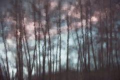 Künstlerische Reflexionsschattenbilder von Bäumen Lizenzfreie Stockfotos